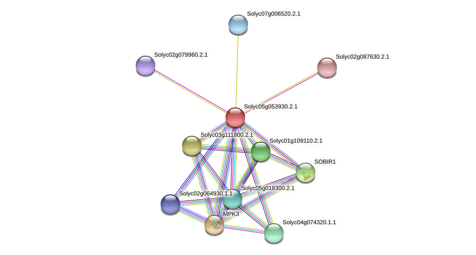 Solyc05g053930.2.1 protein (Solanum lycopersicum) - STRING interaction network