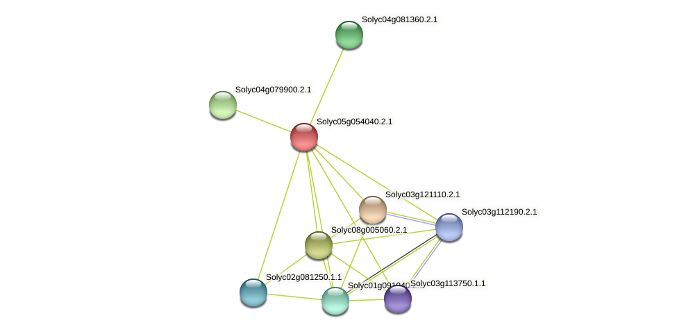 Solyc05g054040.2.1 protein (Solanum lycopersicum) - STRING interaction network