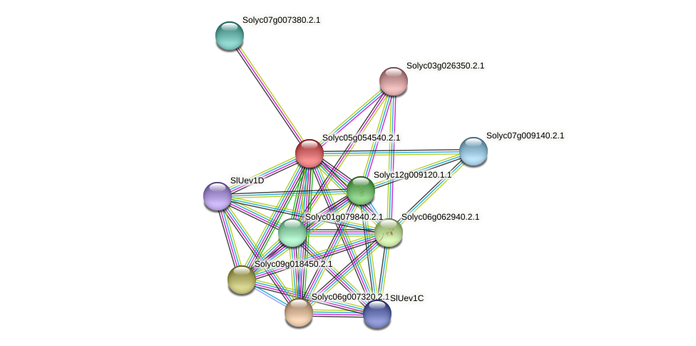 Solyc05g054540.2.1 protein (Solanum lycopersicum) - STRING interaction network