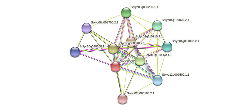 Solyc05g054630.2.1 protein (Solanum lycopersicum) - STRING interaction network
