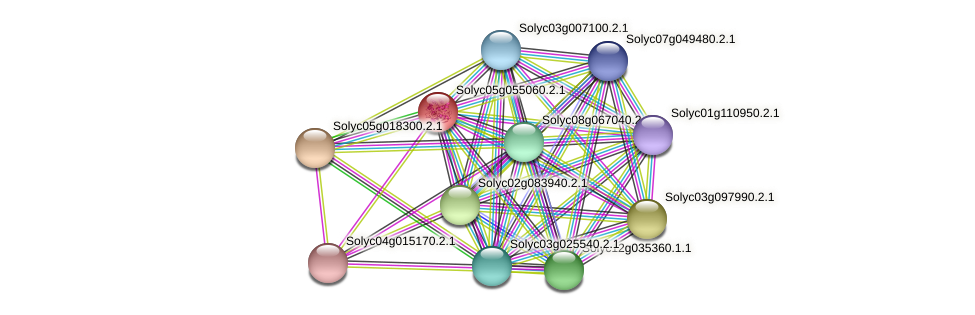 Solyc05g055060.2.1 protein (Solanum lycopersicum) - STRING interaction network