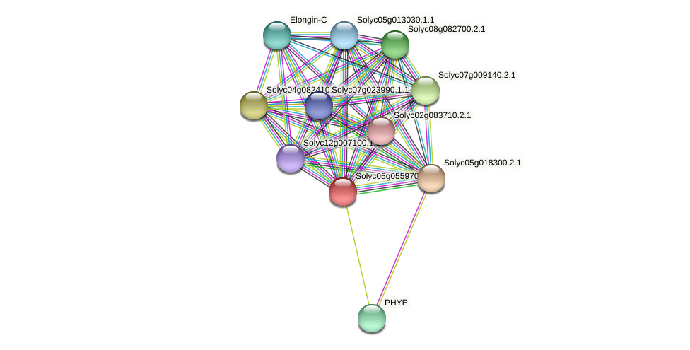 Solyc05g055970.2.1 protein (Solanum lycopersicum) - STRING interaction network