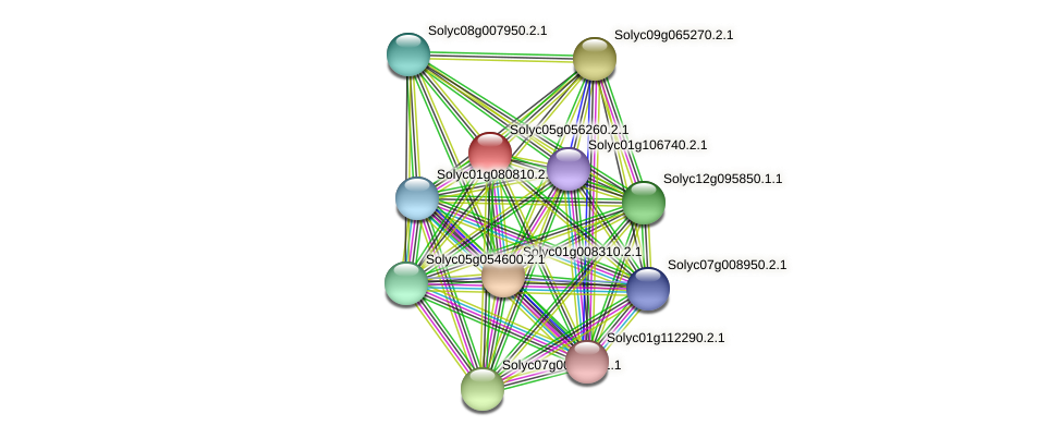 Solyc05g056260.2.1 protein (Solanum lycopersicum) - STRING interaction network