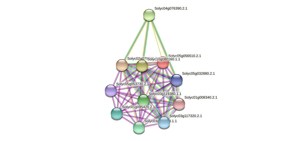 Solyc05g056510.2.1 protein (Solanum lycopersicum) - STRING interaction network