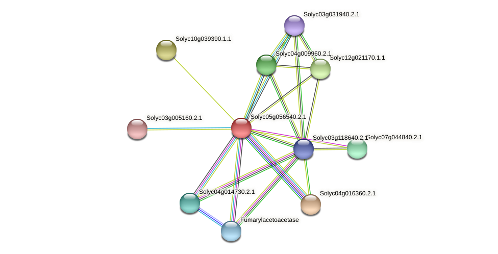 101265925 protein (Solanum lycopersicum) - STRING interaction network