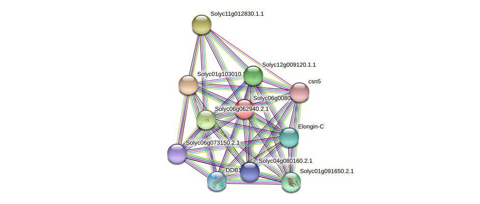 Solyc06g008080.1.1 protein (Solanum lycopersicum) - STRING interaction network