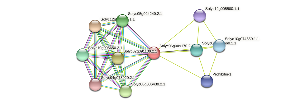 101260234 protein (Solanum lycopersicum) - STRING interaction network