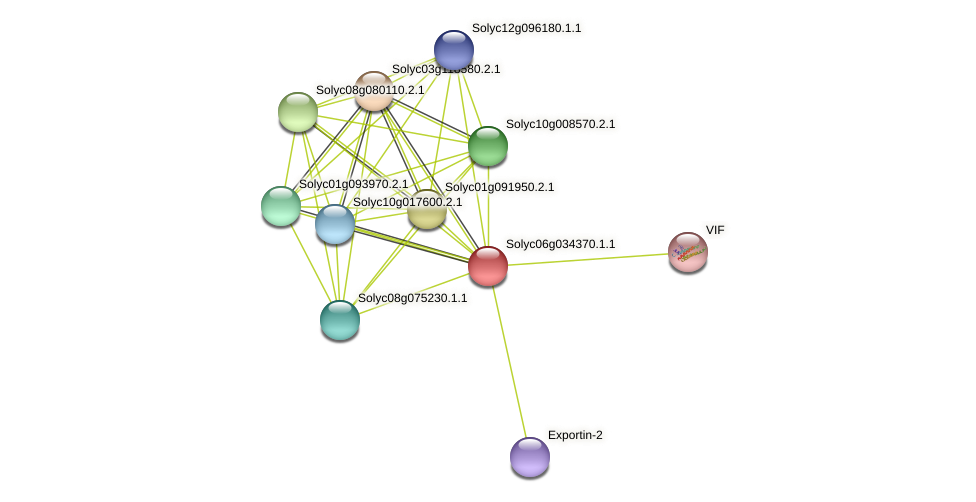101247130 protein (Solanum lycopersicum) - STRING interaction network