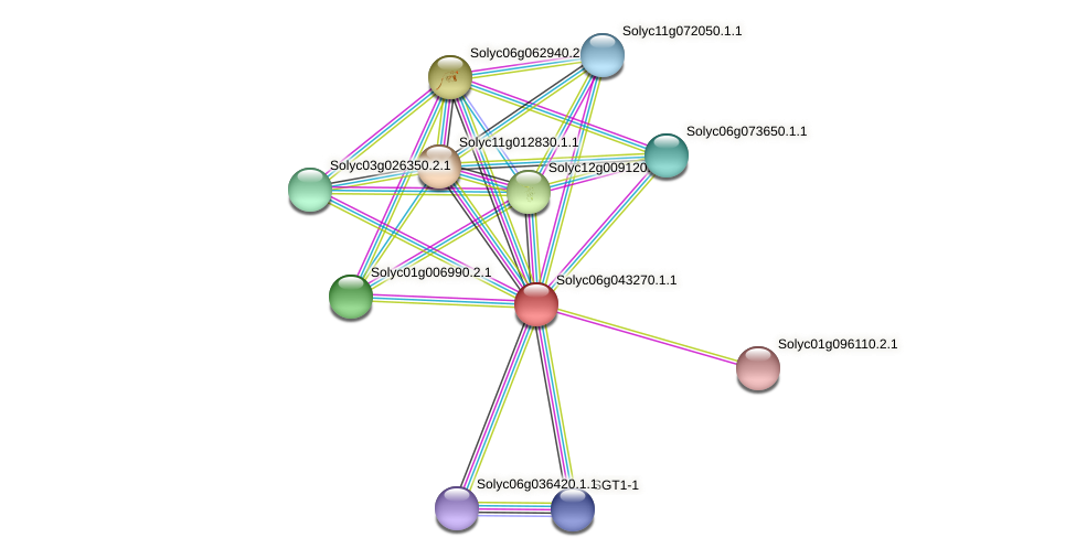 Solyc06g043270.1.1 protein (Solanum lycopersicum) - STRING interaction network