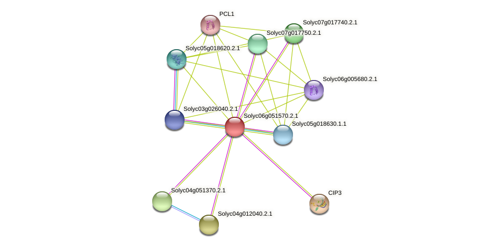 101253595 protein (Solanum lycopersicum) - STRING interaction network