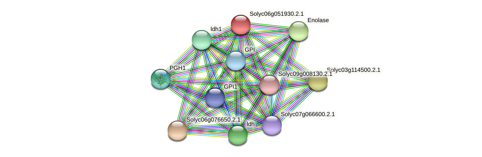 Solyc06g051930.2.1 protein (Solanum lycopersicum) - STRING interaction network