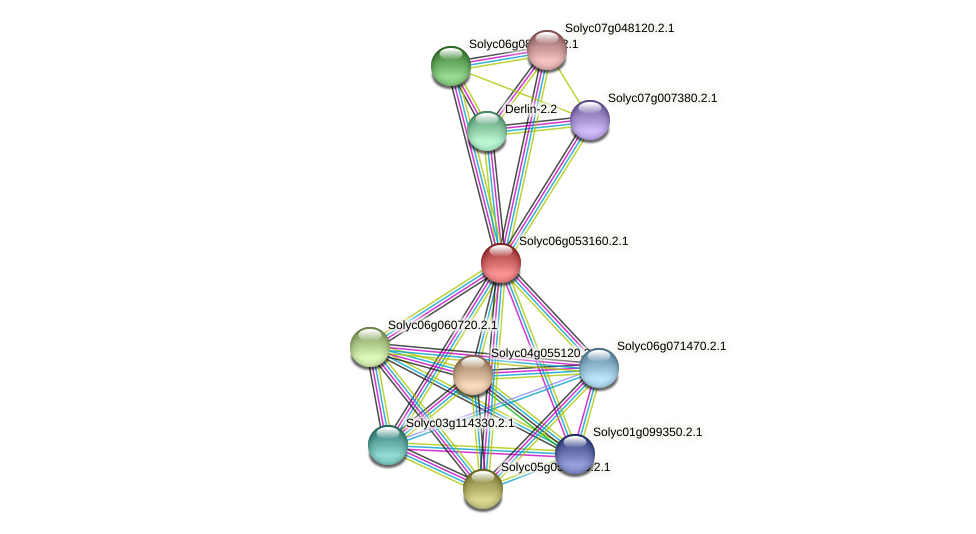 101262817 protein (Solanum lycopersicum) - STRING interaction network