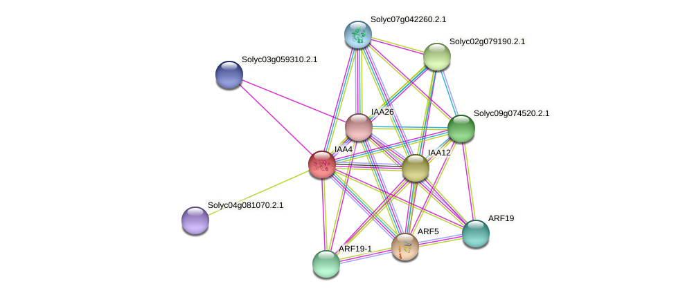 Solyc06g053840.2.1 protein (Solanum lycopersicum) - STRING interaction network