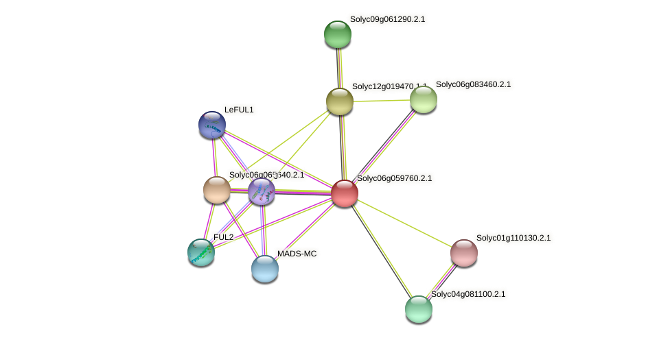 Solyc06g059760.2.1 protein (Solanum lycopersicum) - STRING interaction network