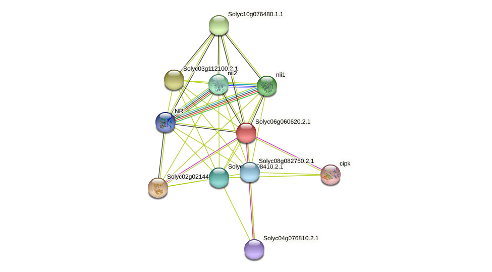 Solyc06g060620.2.1 protein (Solanum lycopersicum) - STRING interaction network