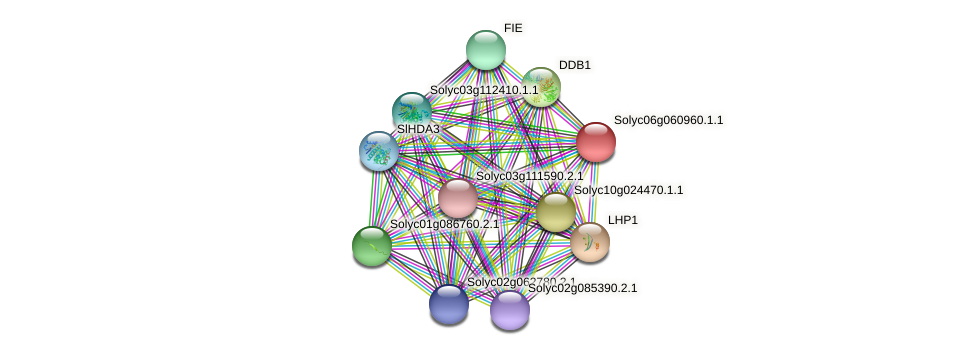 Solyc06g060960.1.1 protein (Solanum lycopersicum) - STRING interaction network