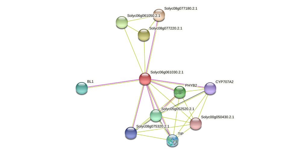 101245957 protein (Solanum lycopersicum) - STRING interaction network