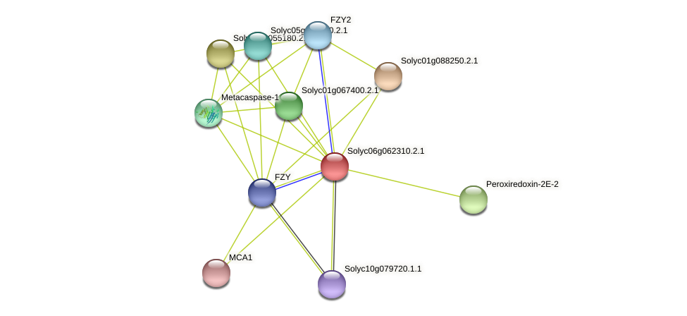 Solyc06g062310.2.1 protein (Solanum lycopersicum) - STRING interaction network