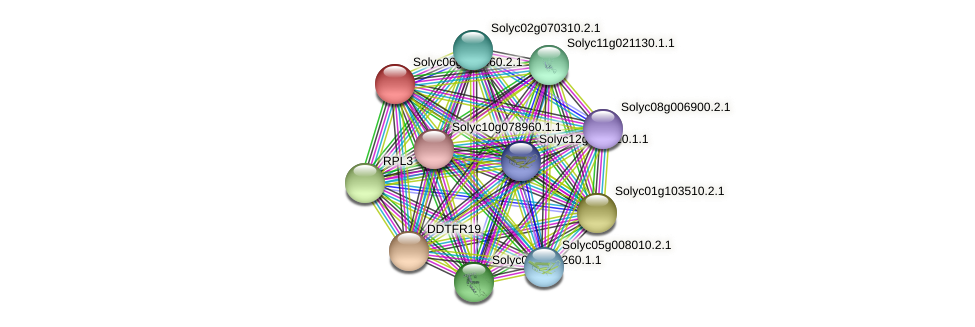 Solyc06g064460.2.1 protein (Solanum lycopersicum) - STRING interaction network