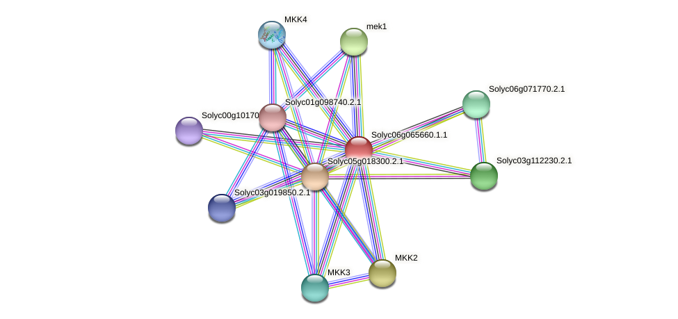 Solyc06g065660.1.1 protein (Solanum lycopersicum) - STRING interaction network