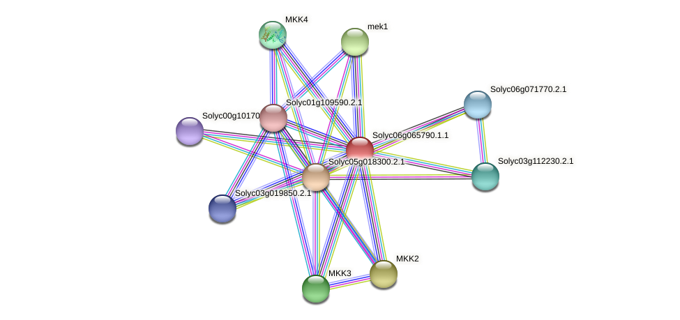 101249831 protein (Solanum lycopersicum) - STRING interaction network