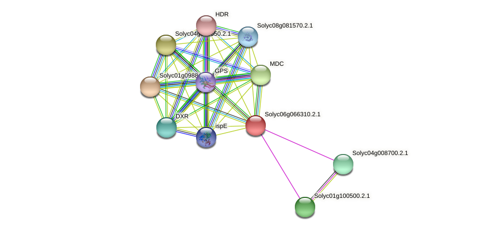 Solyc06g066310.2.1 protein (Solanum lycopersicum) - STRING interaction network