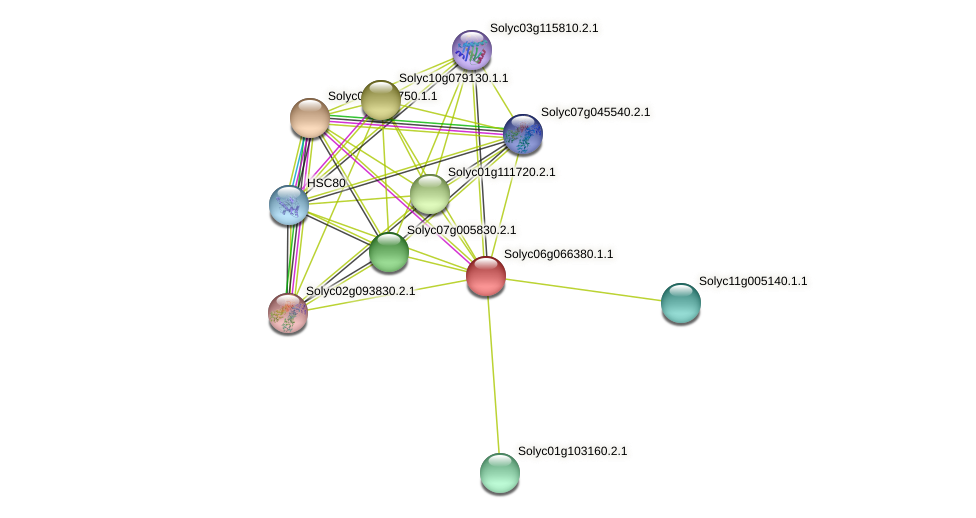 Solyc06g066380.1.1 protein (Solanum lycopersicum) - STRING interaction network