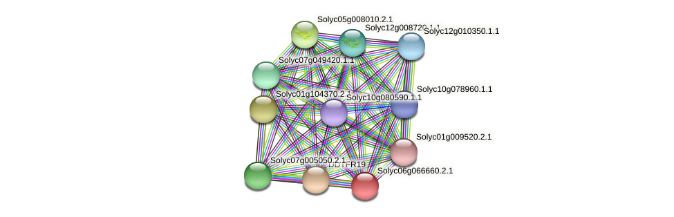 Solyc06g066660.2.1 protein (Solanum lycopersicum) - STRING interaction network