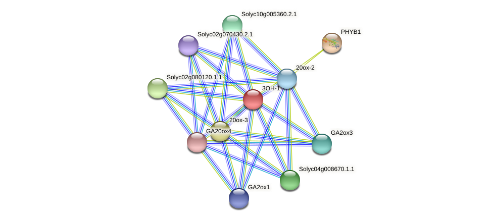 3OH-1 protein (Solanum lycopersicum) - STRING interaction network