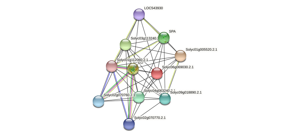 Solyc06g069030.2.1 protein (Solanum lycopersicum) - STRING interaction network