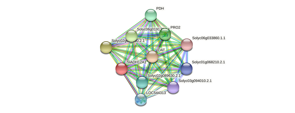 Solyc06g071000.2.1 protein (Solanum lycopersicum) - STRING interaction network