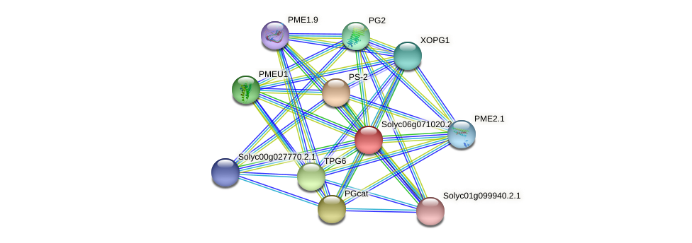 Solyc06g071020.2.1 protein (Solanum lycopersicum) - STRING interaction network