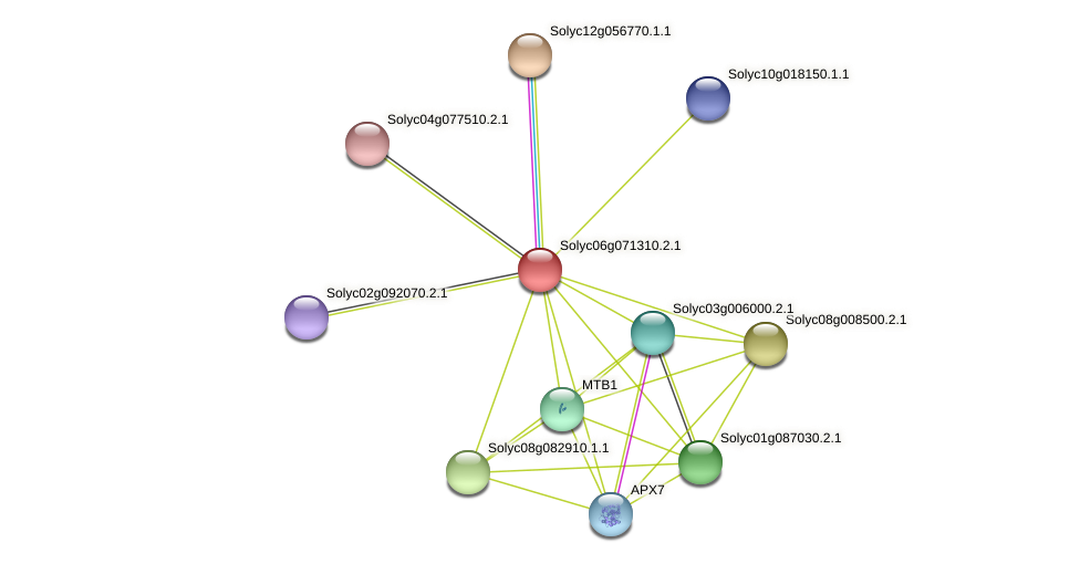 Solyc06g071310.2.1 protein (Solanum lycopersicum) - STRING interaction network