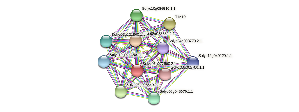 101266130 protein (Solanum lycopersicum) - STRING interaction network