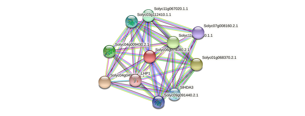 Solyc06g074080.2.1 protein (Solanum lycopersicum) - STRING interaction network