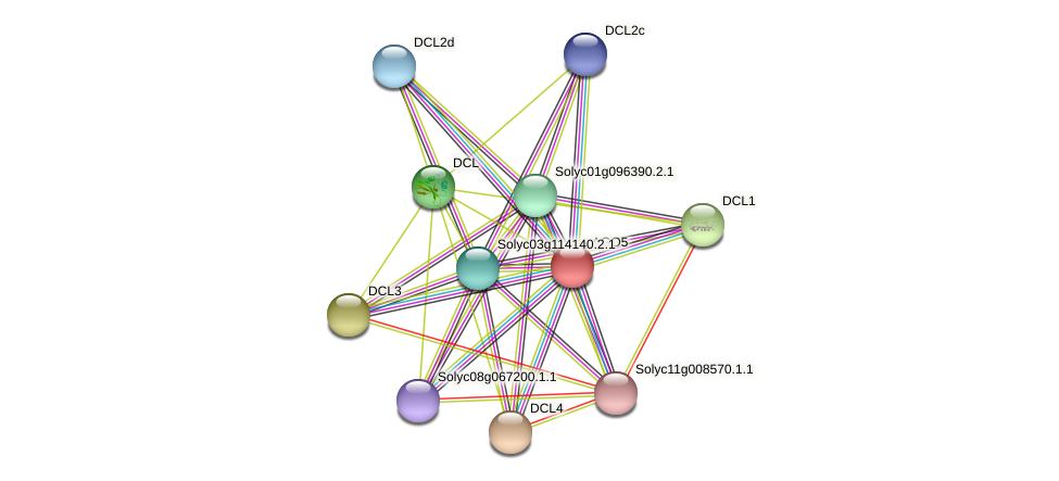 AGO5 protein (Solanum lycopersicum) - STRING interaction network
