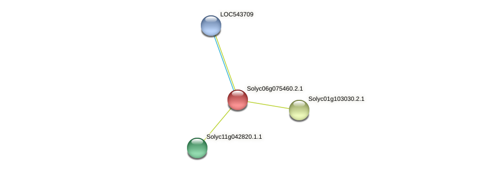 Solyc06g075460.2.1 protein (Solanum lycopersicum) - STRING interaction network
