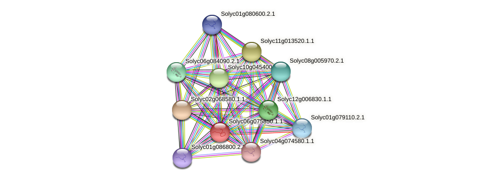 Solyc06g075850.1.1 protein (Solanum lycopersicum) - STRING interaction network