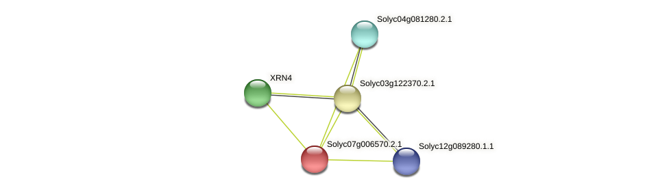 Solyc07g006570.2.1 protein (Solanum lycopersicum) - STRING interaction network