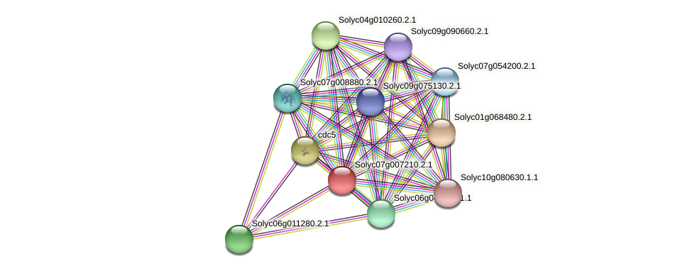 Solyc07g007210.2.1 protein (Solanum lycopersicum) - STRING interaction network