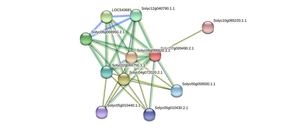 Solyc07g009490.2.1 protein (Solanum lycopersicum) - STRING interaction network