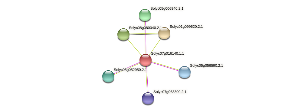 Solyc07g016140.1.1 protein (Solanum lycopersicum) - STRING interaction network