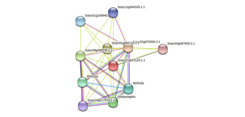 Solyc07g021120.1.1 protein (Solanum lycopersicum) - STRING interaction network