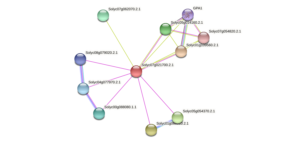 Solyc07g021700.2.1 protein (Solanum lycopersicum) - STRING interaction network