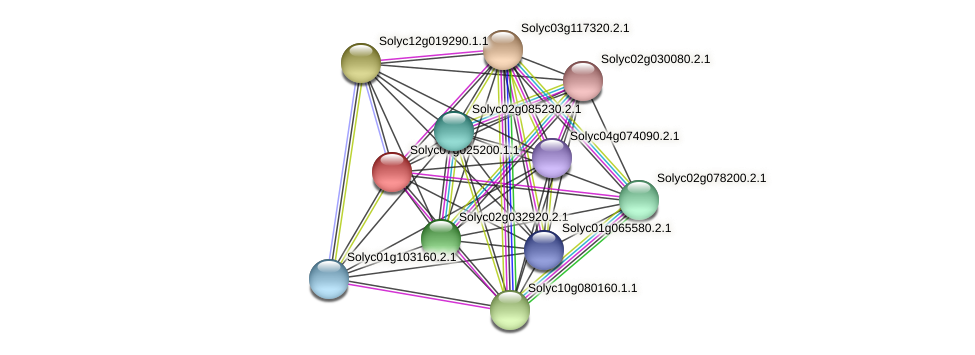 Solyc07g025200.1.1 protein (Solanum lycopersicum) - STRING interaction network