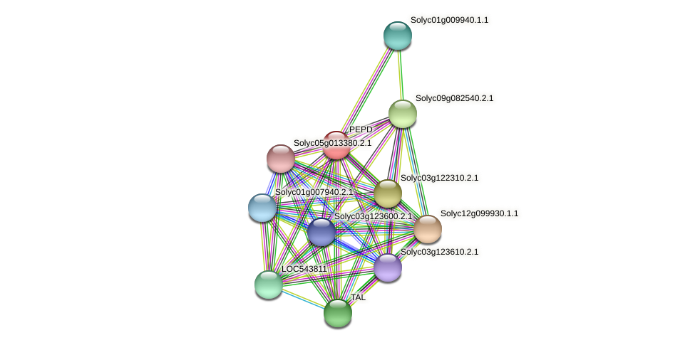 PEPD protein (Solanum lycopersicum) - STRING interaction network
