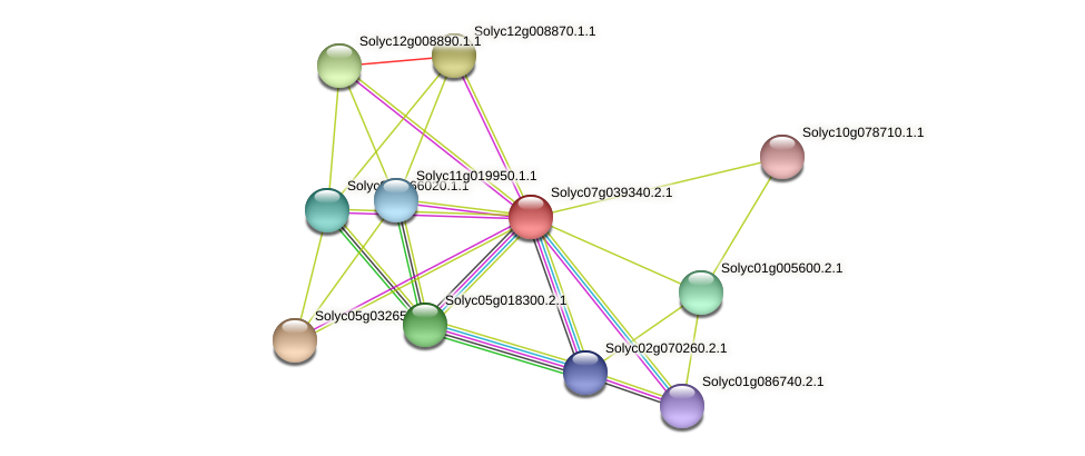 Solyc07g039340.2.1 protein (Solanum lycopersicum) - STRING interaction network