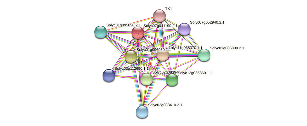 Solyc07g041190.2.1 protein (Solanum lycopersicum) - STRING interaction network