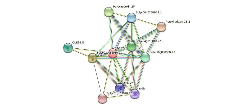 Solyc07g042440.2.1 protein (Solanum lycopersicum) - STRING interaction network