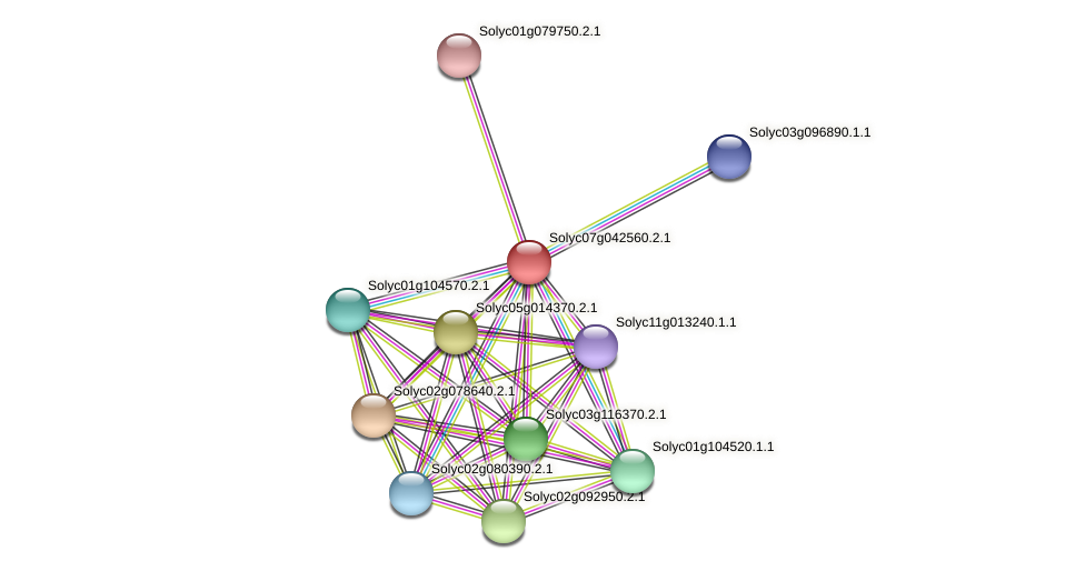 Solyc07g042560.2.1 protein (Solanum lycopersicum) - STRING interaction network